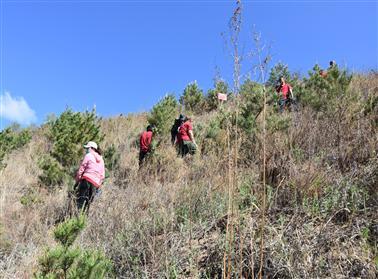 围场分公司:大力弘扬塞罕坝精神 积极参加义务植树活动、